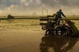 水稻插秧要遵从的标准